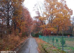 Золото листьев Японии