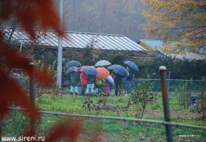 Японские зонтики в сиреневом саду